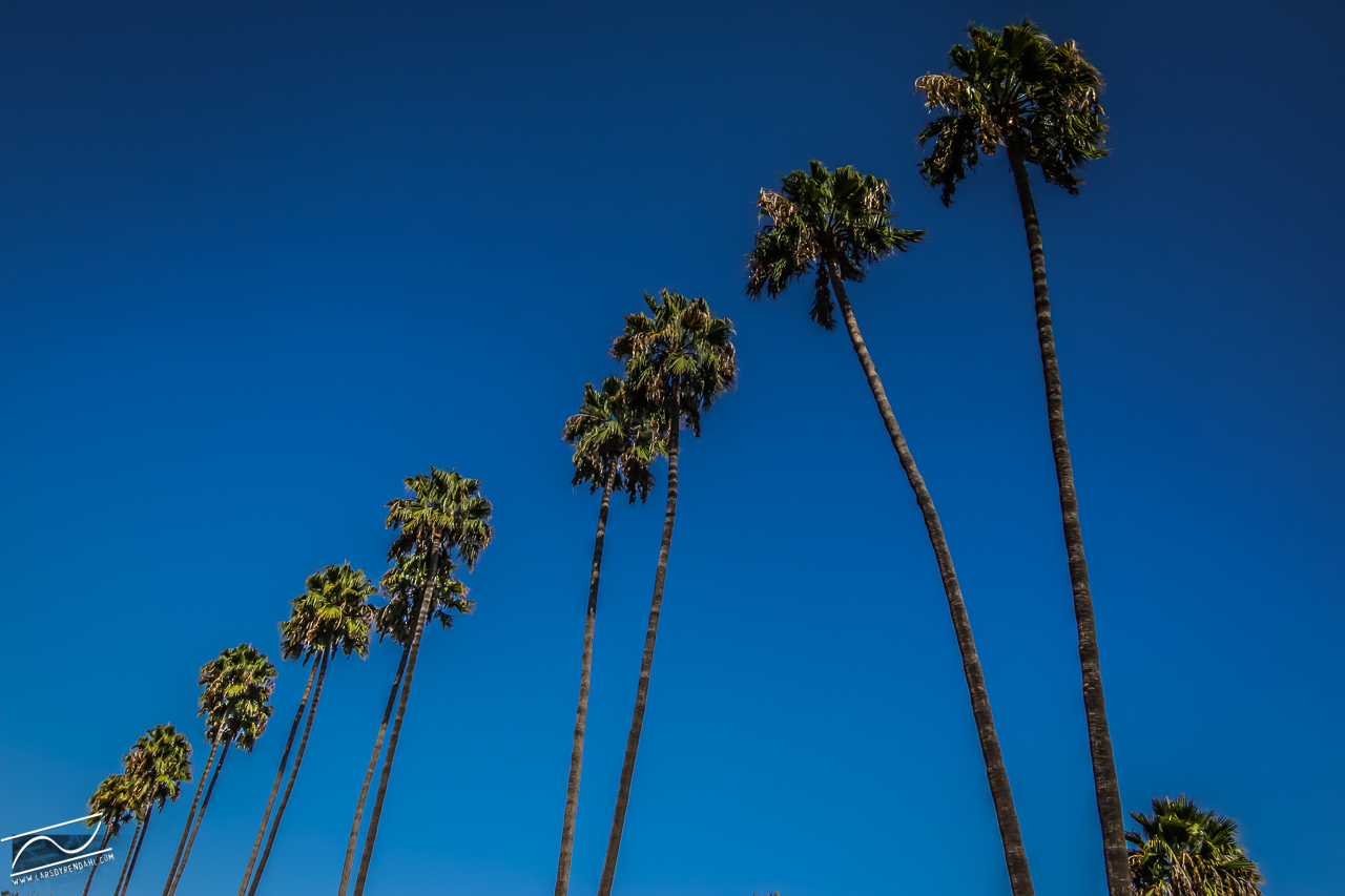 chasing palm trees